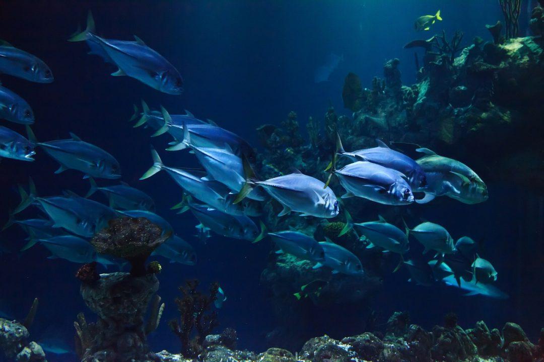 Universeum Unterwasserwelt